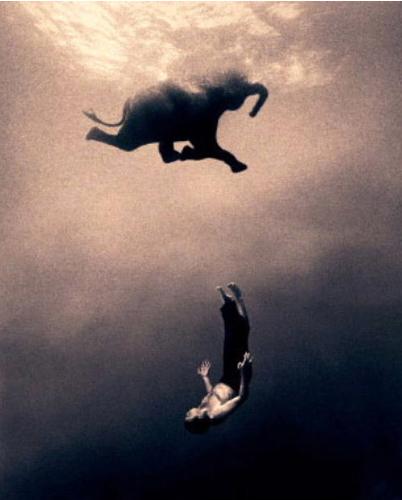 elephant swimming http_::www.flickr.com:photos:46742671@N00:442768518: