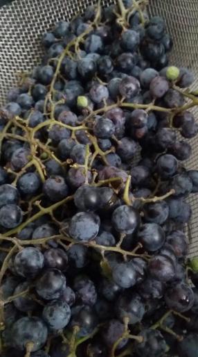f grapes
